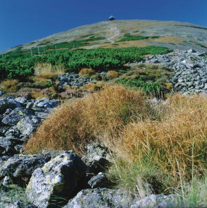 Najwyższy szczyt Sudetów - Śnieżka (1602 m n.p.m.)